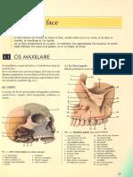 Os de La Face - Cavitées Et Os de La Tête Osseuse