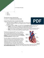 Fisiologia II-1 - Introduzione al cuore