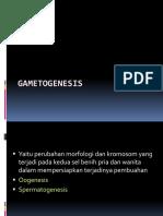 Gametogenesis RPS
