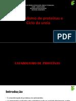 Catabolismo de Proteínas e Ciclo Da Ureia