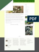 Plante la ghiveci - Cadou de casa noua, marturii pentru nunta! DreamGardens.pdf