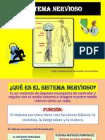 diapositivasdelsistemanervioso-121111163440-phpapp02.pdf