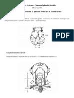 Intrebari Examen La Cardiologie