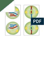 potongan gambar fase pembelahan sel.docx