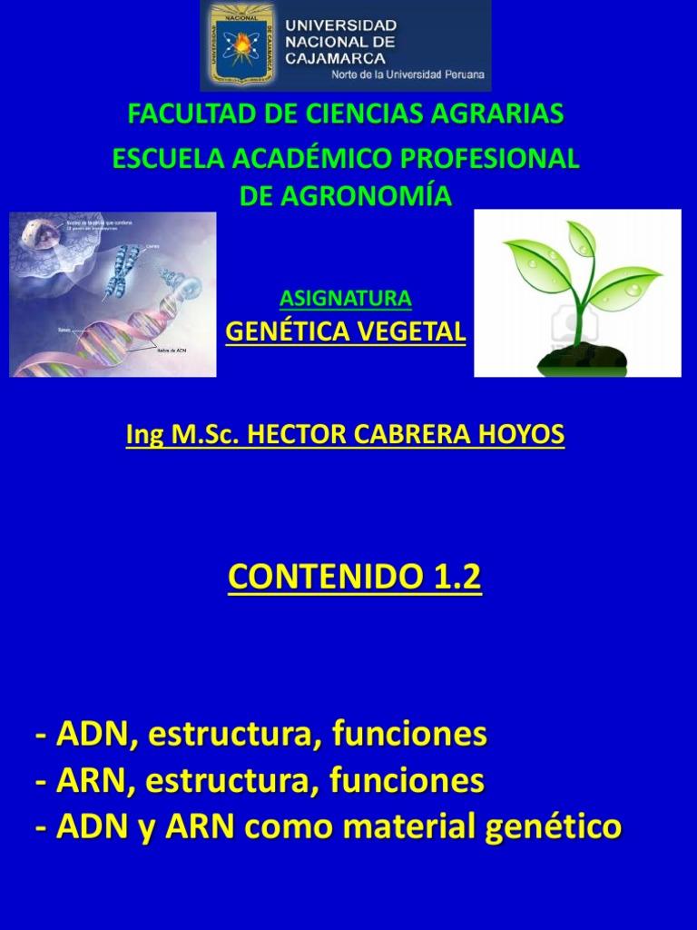 Segunda Clase Genética Vegetal Rna Dna