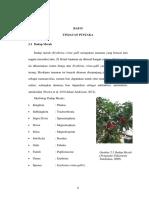 dadap merah ( erythrina cristagalli)