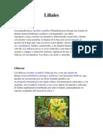 Lilidae Familias