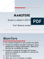 mamifere