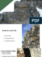 Land Plants and Animals of Antarctica