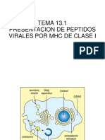 TEMA 13.1.- Presentación de Péptidos Virales Por MHC Clase I.revisado