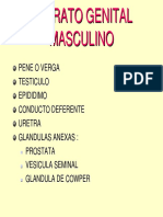 13-aparato-genital-masculino-dr-salas.pdf