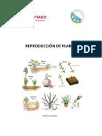Reproducción de Plantas
