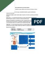 sesion 7 metabolismo lipidico