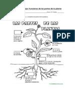 Guía de Trabajo_partes e Las Plantas y Funciones_1 Medio
