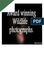 Award winning photography.pdf