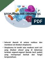 ...Sitoplasma Dan Organel Sel