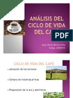Ciclo de Vida Del Cafe