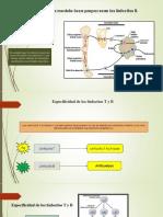 Copia de Inmunidad y alergia.pptx
