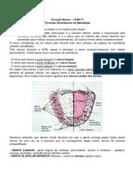 CIRURGIA - Anestesia Mandibular