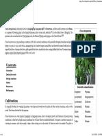 Ficus Benjamina - Wikipedia