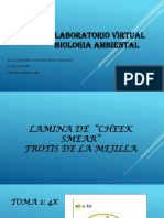 Laboratorio Virtual Zulma Duitama