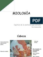 3) Miologia