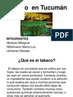 Tabaco en Tucumán