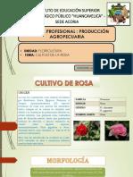 CULTIVO DE ROSA.pptx