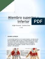 Miembro Superior y Inferior (2)