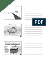 Forma-que-actuan-los-patogenos.pdf