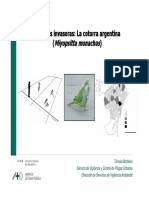 PPT TOMÁS MONTALVO-COTORRA ARGENTINA.pdf