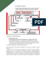 Actividades para trabajar el Aspecto Fonológico.docx
