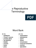 male reproductive terminology