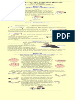 Beginner Magic.pdf