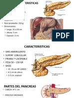 3.Pancreas Converted