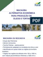 Macaúba - Características e produção de óleo [Modo de Compatibilidade]