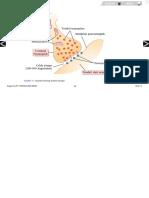 Anatomi Fisio Sinaps
