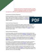 COMO FUNCIONA LA RESPIRACION.docx