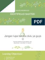 identifikasi bakteri