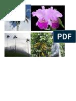 Plantas de Colombia