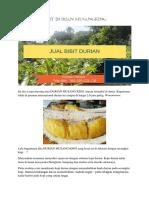 TERBAIK..!Hp/Wa 0822-2022-8118, Durian Duri Hitam, Bibit Durian Musang King Bogor,