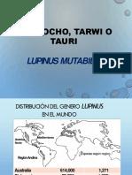 Tarwi Efrain