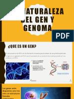 Naturaleza Del Gen y Genoma