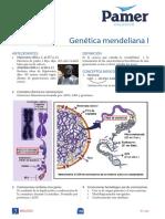 B_4° Año_S3_genetica mendeleiana