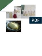 flotografias micfrobiologia