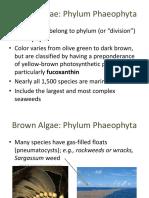 Protista Phaeophyta