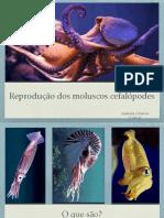 Reprodução em cefalópodes