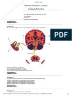 Teste 2 Anatomia Vestibular Central