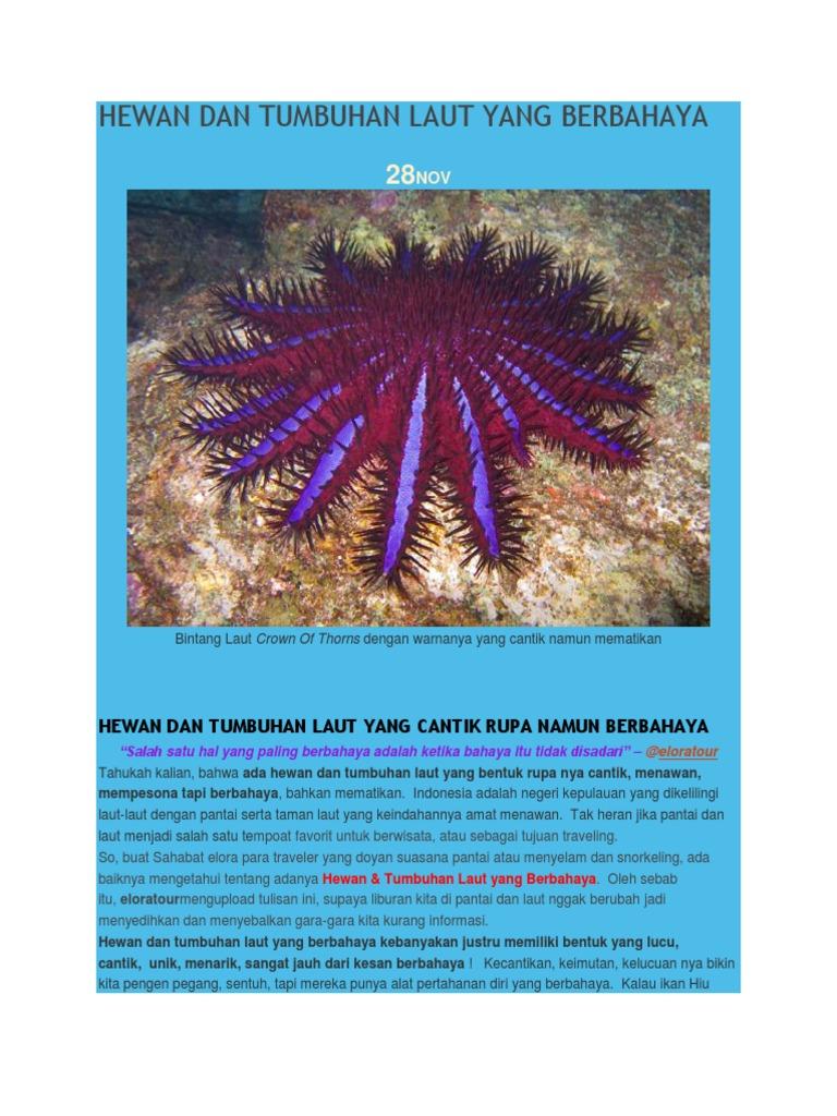88+ Gambar Hewan Dan Tumbuhan Laut Gratis Terbaru