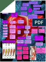 enzimologia hepatica